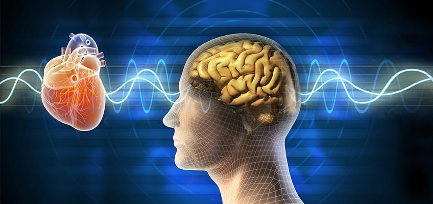 Intuition - Heart, Brain & Body